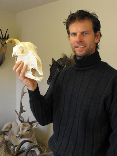 Queenstown taxidermist David Jacobs holds the skull of Shrek the sheep yesterday before the start...