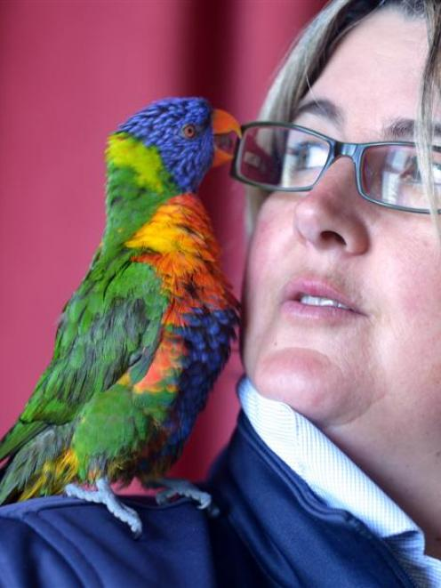 Rainbow lorikeet Steve with SPCA Otago executive officer Sophie McSkimming in Opoho yesterday....