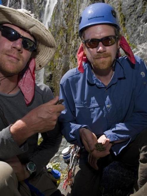 Rock-climbing twins Joe (left) and Dave Newman, of Ventura, California, climb in Sinbad Gully at...