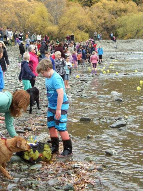 Rubber ducks in the Arrowtown Autumn Festival's duck race were cheered on by a large crowd which...