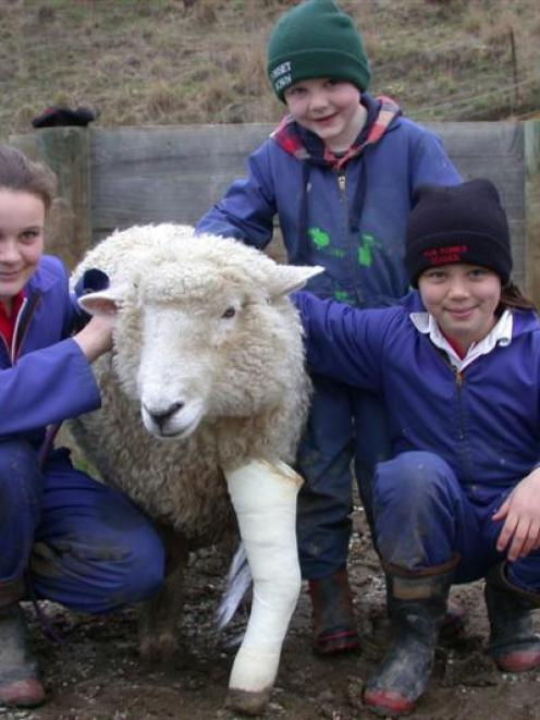 Sarah (12), Logan (4) and Megan (8) Dodd with Skip the sheep. A cast from her broken leg is...