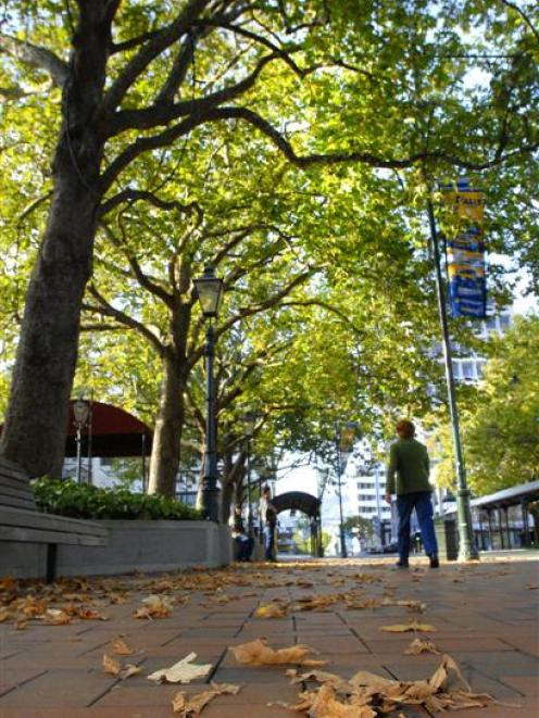 Scientific tests suggest many of these trees in the Octagon, Dunedin, are likely to live much...