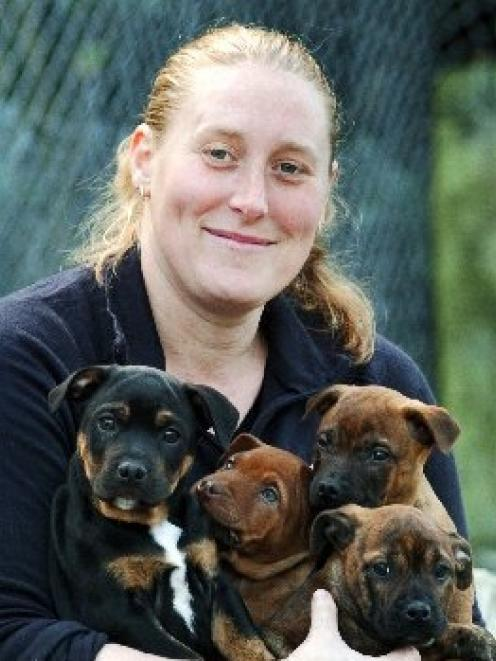 SPCA Otago animal attendant Rachel Van Grunsven holds  Napoleon, Nero, Nikita and Noah, four of ...