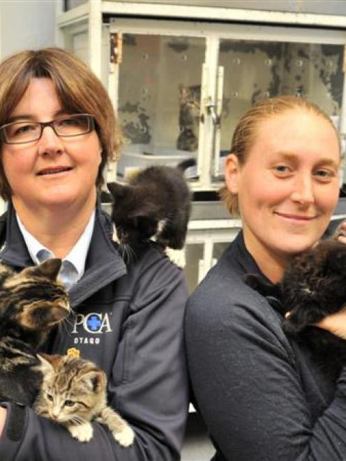 SPCA Otago executive officer Sophie McSkimming and animal attendant Rachel Van Grunsven in the...