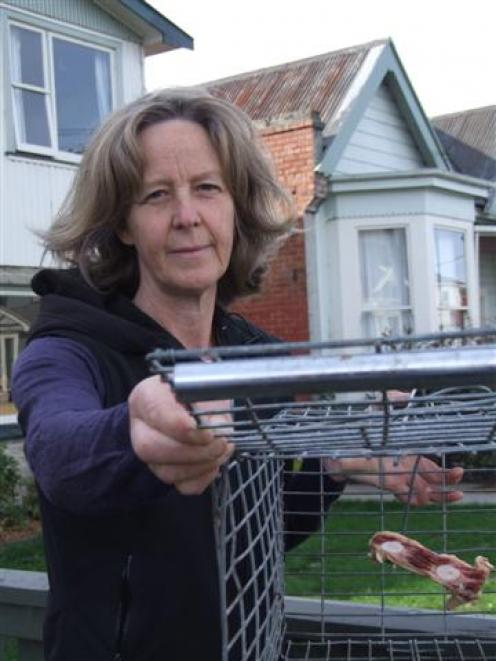 Tabby trap: Carol Clark, of Port Chalmers, prepares to set a live trap for feral felines which...