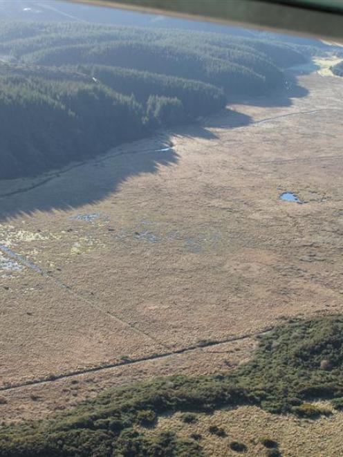 Takitakitoa wetland near Henley. Photo supplied.