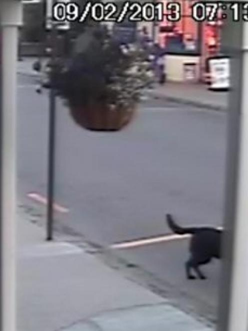 The dog caught by CCTV footage in the act of stealing bread. Photo supplied.