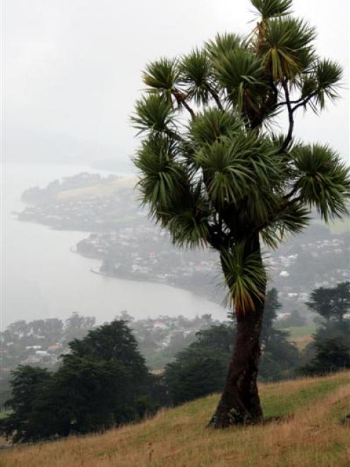 The Dunedin City Council  is on the hunt for the perfect camping ground on  Otago Peninsula....