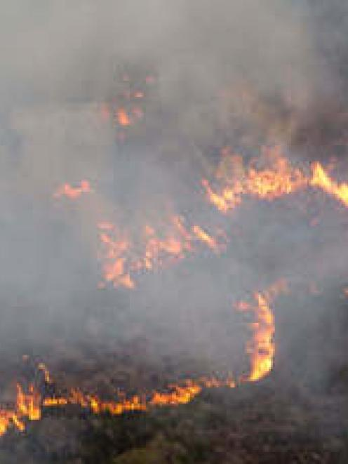 The fire burns on Great Barrier Island. Photo NZ Herald