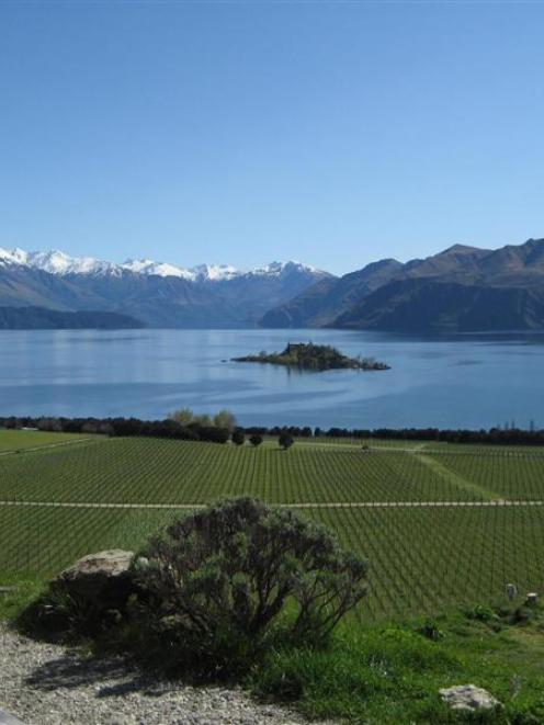 The first commercial vineyard  block at Rippon was planted in 1982, largely against the advice of...