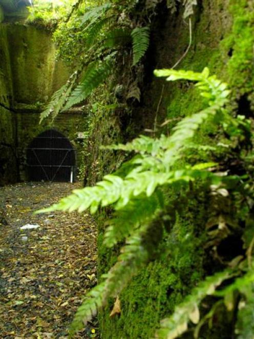 The former Caversham railway tunnel. Photo by Gerard O'Brien.