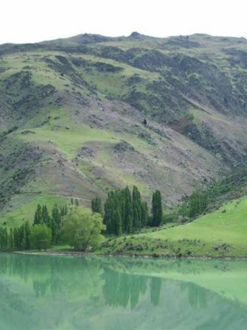 The higher-than-usual spring rainfall in Central Otago has turned usually barren hills green,...