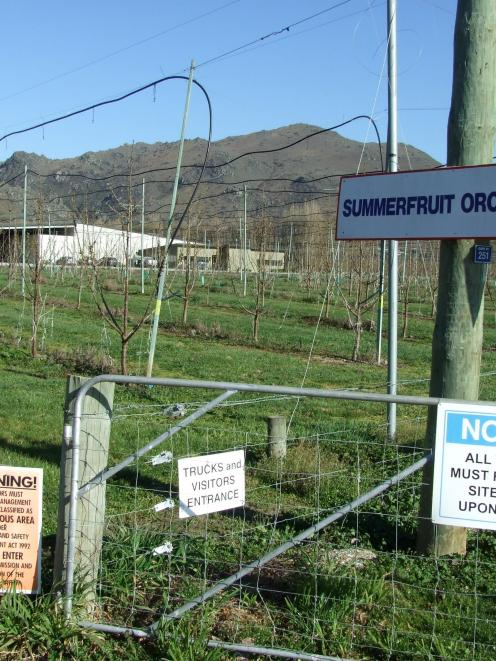 The Summerfruit Orchards Ltd packing shed at Earnscleugh. Photo by Lynda Van Kempen.