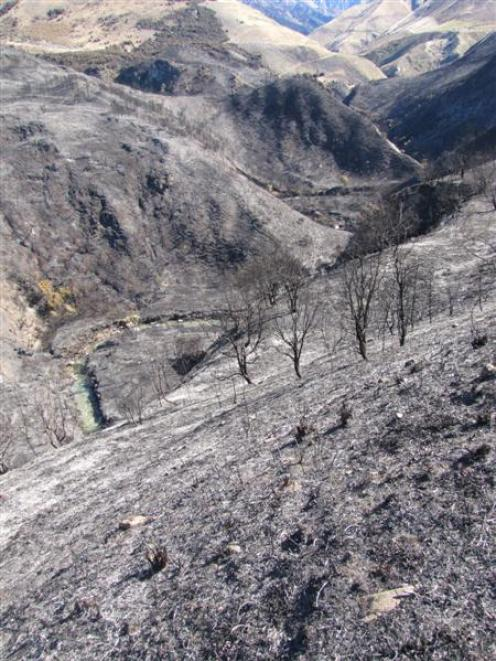 The surviving remnant of the Craig Burn reserve. Last Friday's fire destroyed about 30ha of...