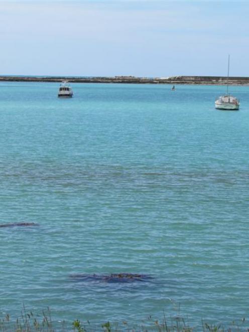 The  unidentified  streak (foreground) on Oamaru Harbour. Photo by Andrew Ashton.