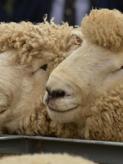 The variation in returns for sheepmeat producers and exporters over the past few years has been...