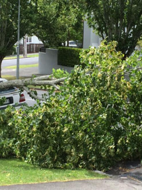 The winds brought this tree down on a car in Martin Avenue in the Auckland suburb of Remuera....