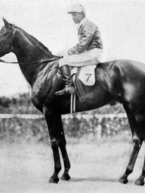The winner of the 1912 New Zealand Galloping Cup at Riccarton, Mr E. J. Watt's Midnight Sun. -...