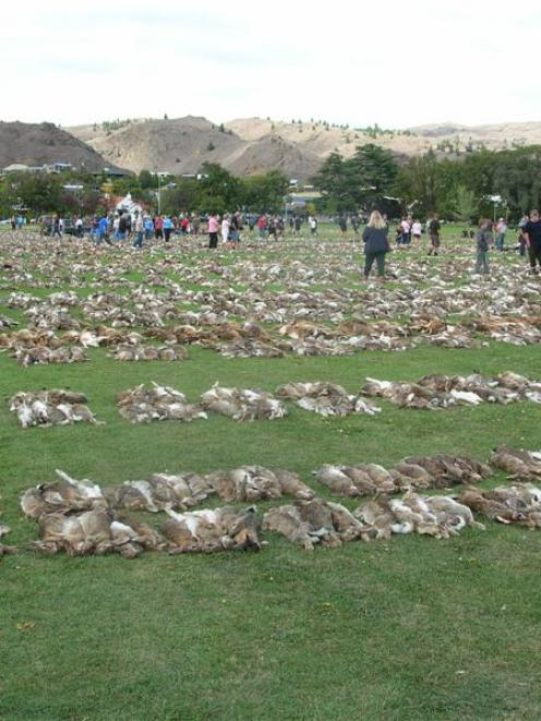 Thousands of dead rabbits carpet Pioneer Park in Alexandra on Saturday, following the 19th annual...