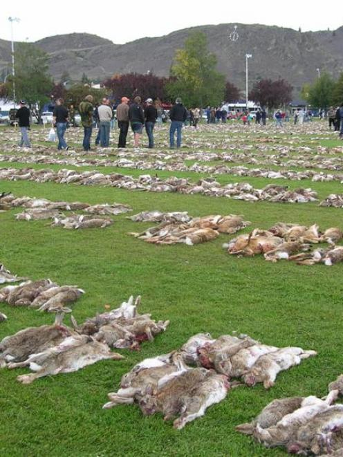 Thousands of dead rabbits line Pioneer Park in Alexandra on Saturday, following the 18th annual...