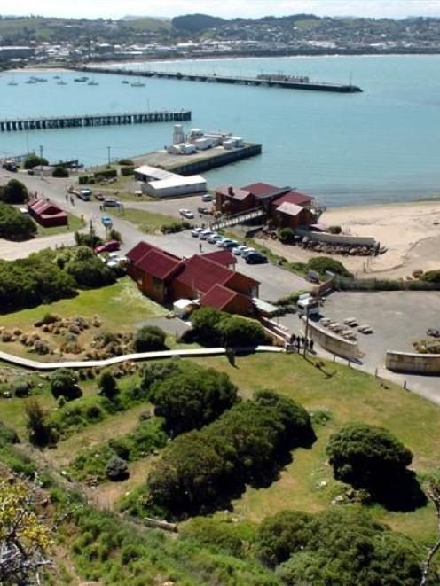 Tourism success stories in the Waitaki district in recent times: Oamaru's  Blue Penguin Colony....