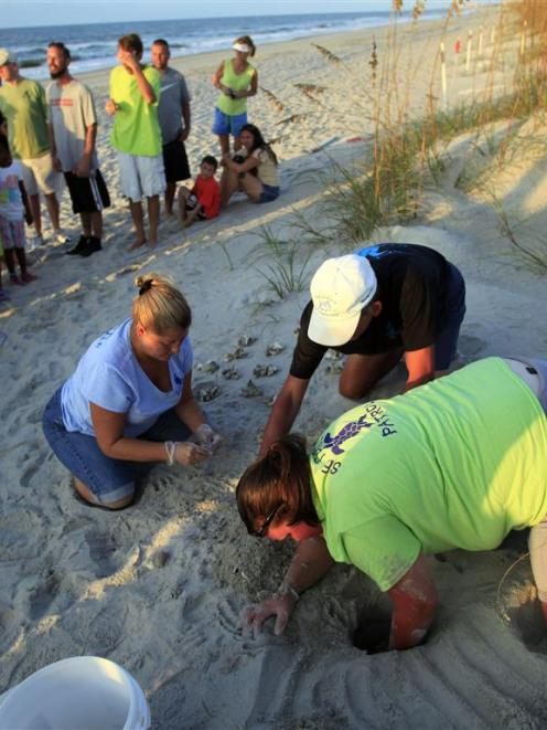 Turtle volunteers Marianne Glaze, Don Pease and Amanda Jenkins take an inventory of a hatched sea...