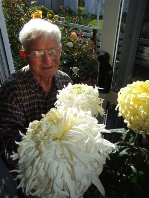 Waimate chrysanthemum grower Allen Smith with some of his blooms. Photo by Sally Rae.