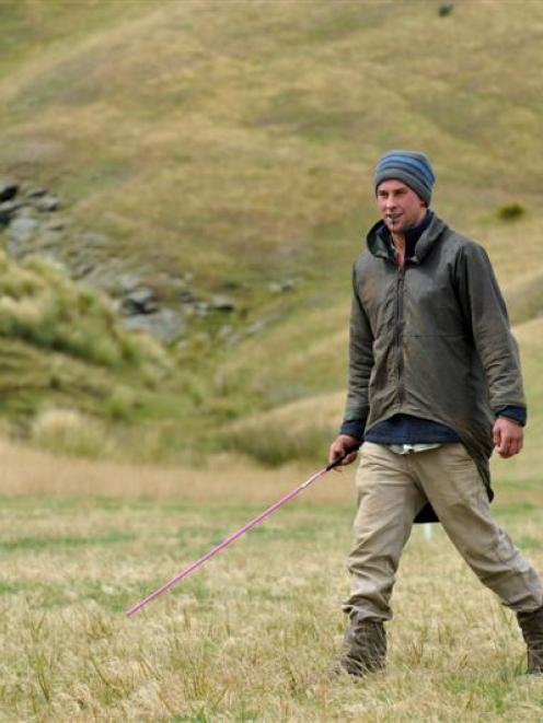 Waipori Station shepherd Cody Pickles competes in the Taieri Collie Club's annual trials at Lee...