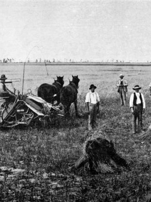 Workers with  reapers and binders in a harvest field on the Canterbury Plains. - Otago Witness,...