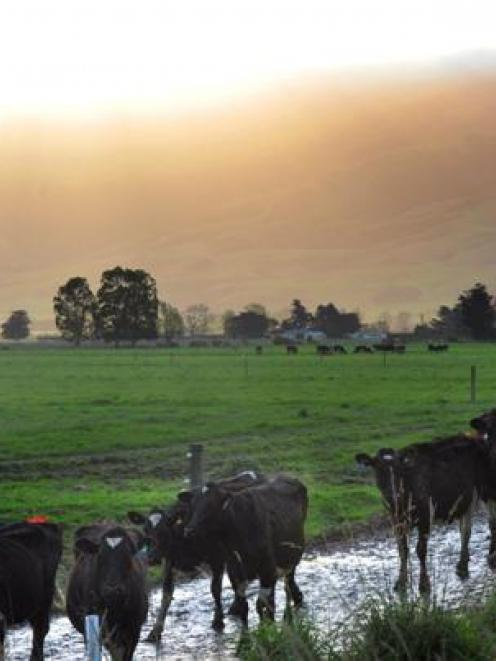 World dairy prices are expected to remain high as China continues its buying frenzy. Pictured,...