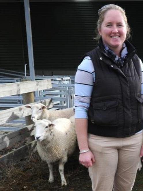 Young Farmers stock-judging competitor Olivia Ross takes a break from assessing sheep during the...