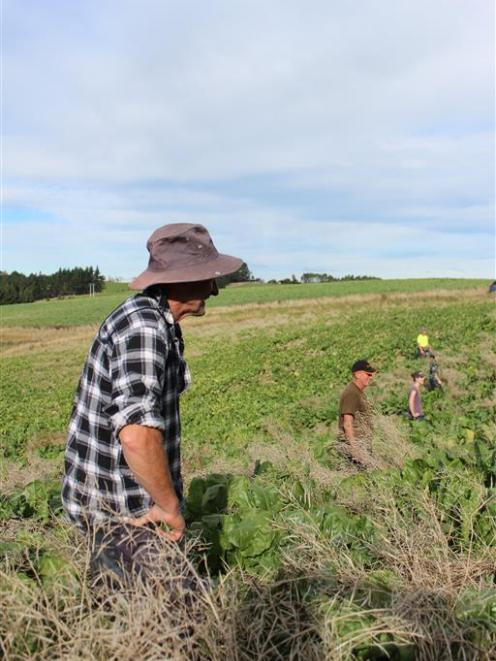 Volunteer Murray Bichan (front) scours a South Otago property for velvetleaf with fellow...