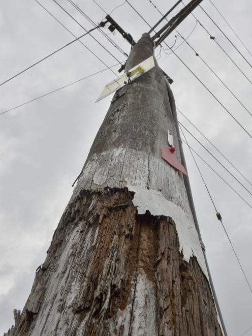 A red-tagged power pole in North Rd near Dunedin North Intermediate. Photos: Gerard O'Brien.