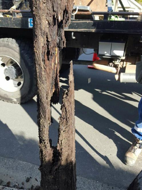The rotted underground part of a dangerous pole removed by Delta staff in Dunedin last May. Photo supplied.