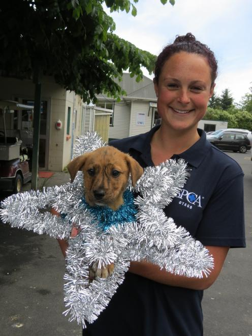 SPCA Otago animal care manager Hannah Hunsche, holding an SPCA puppy for adoption, encourages...