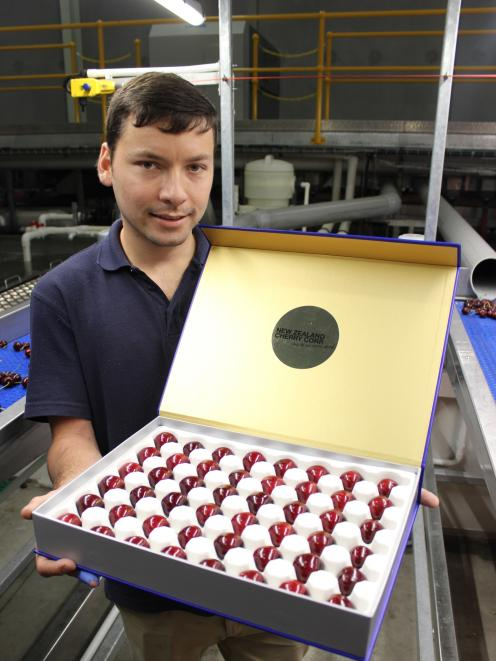 Packhouse worker Patrick Lindegger displays a box of luxury cherries at New Zealand Cherry Corp...
