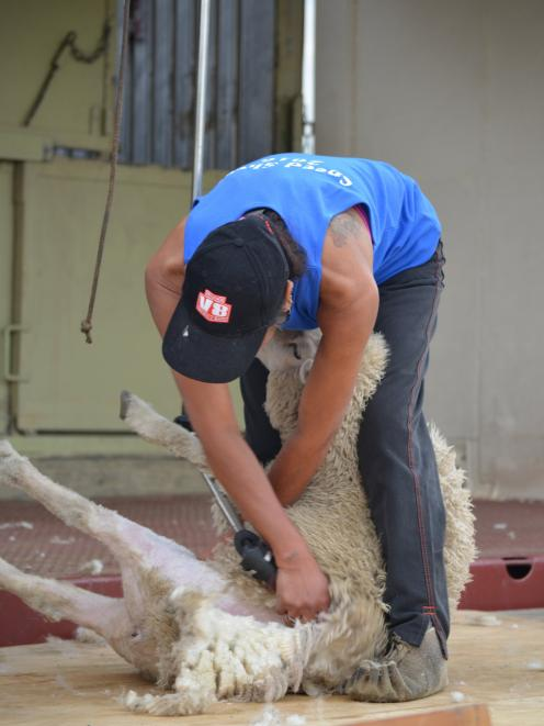 A shearer hard at work at last year's speed shearing event at the Strath Taieri Hotel. Photo supplied.
