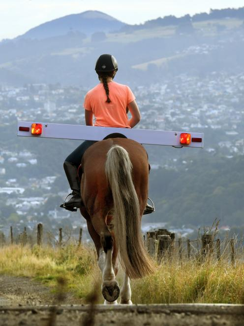 Jayne Beattie tests the proposed  equine ''tail-lights'' on North Rd. Photo: Stephen Jaquiery.