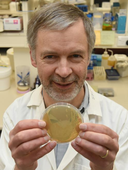 University of Otago Biochemist Prof Iain Lamont is thrilled after being granted more than $1million for his superbug research. Photo: Gregor Richardson