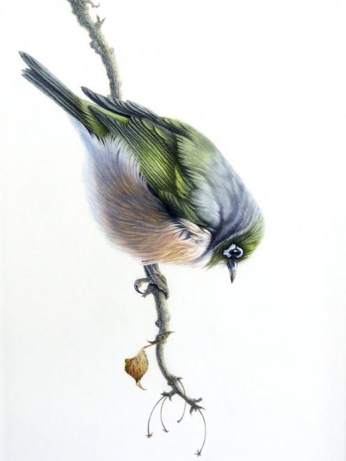 Silvereye, by Karen Baddock.
