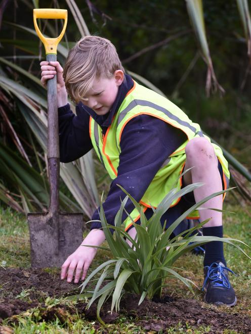 Josiah Scott (12) plants a flax during the Carisbrook School ``Project Gold'' event at Sidey Park, in Dunedin, yesterday. Photo: Peter McIntosh