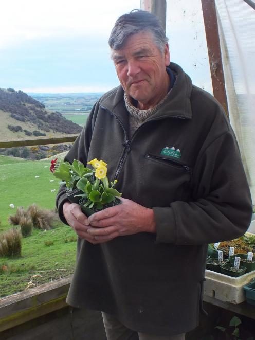 Peter Salmond holds one of Hokonui Alpines' auriculas, one of this year's big sellers. Photo: Gillian Vine