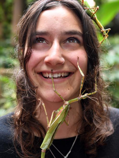 Otago Museum living environments communicator Eden Gray becomes familiar with the Tropical Forest...