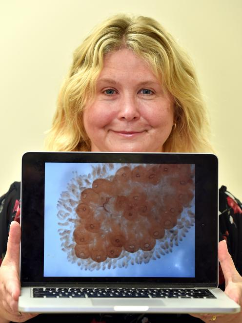University of Otago researcher Dr Megan Wilson displays an image of a sea squirt colony,...