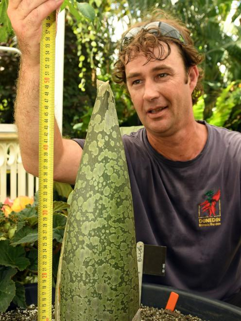 Botanic Garden winter garden plant collection curator Stephen Bishop with the Amorphophallus...