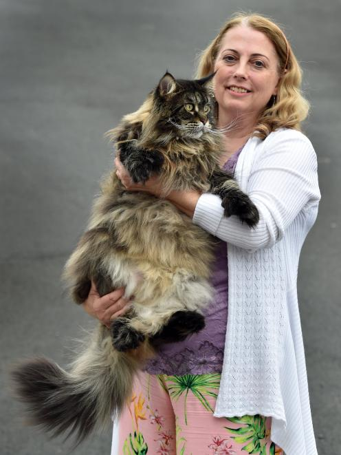 Plenty Of Variety At Cat Show Otago Daily Times Online News