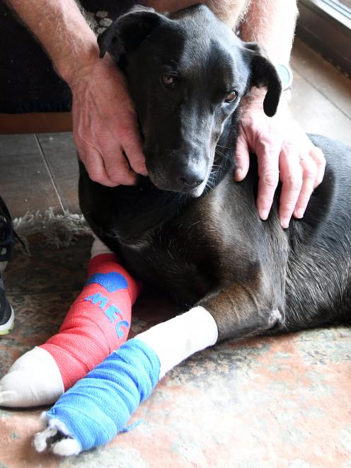 Meg, who was missing, is back home and on the road to recovery. Photo: Craig Baxter