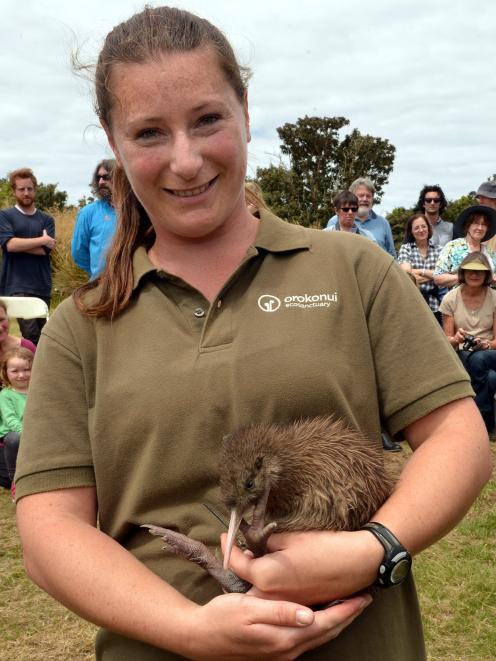 Orokonui Ecosanctuary head ranger Kelly Gough holds Tuatahi, the first of 10 Haast tokoeka kiwi...