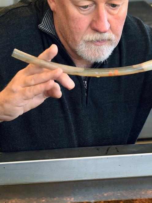 Dunedin Community Salmon Trust chairman Steve Bennett checks eggs which were fertilised before a...