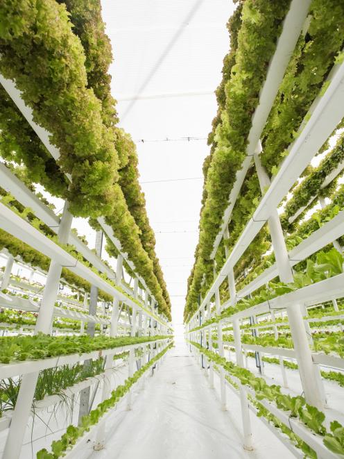 Vertical farming provides an impressive example of vegetable growing which looks more like a biotechnology enterprise than a farming enterprise. Photo: Getty Images